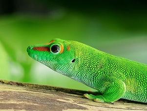 lizard-2732989_640.jpeg