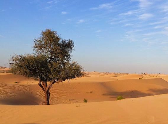 Abu_dhabi_desert-2471553_1920.jpg
