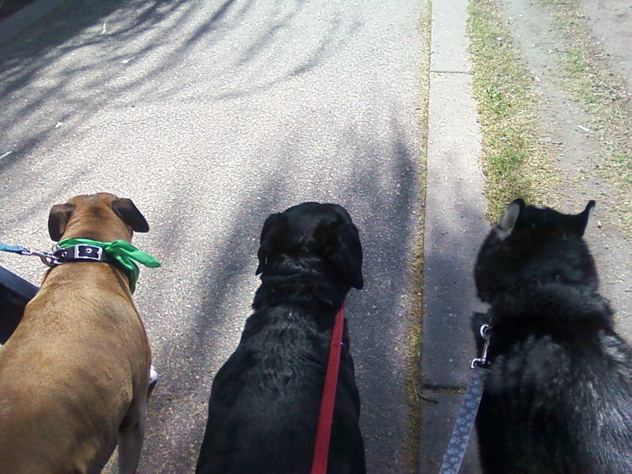 Ginger, Sammy & Garcon