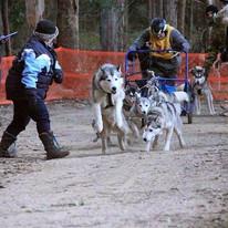 6 Dog Class