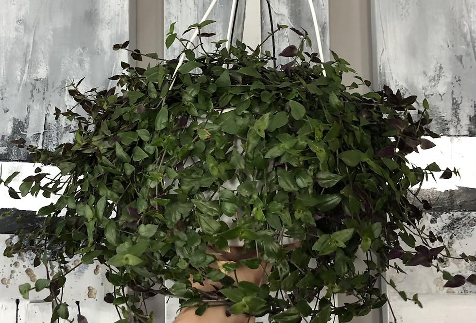 Bridal Veil Hanging  Basket