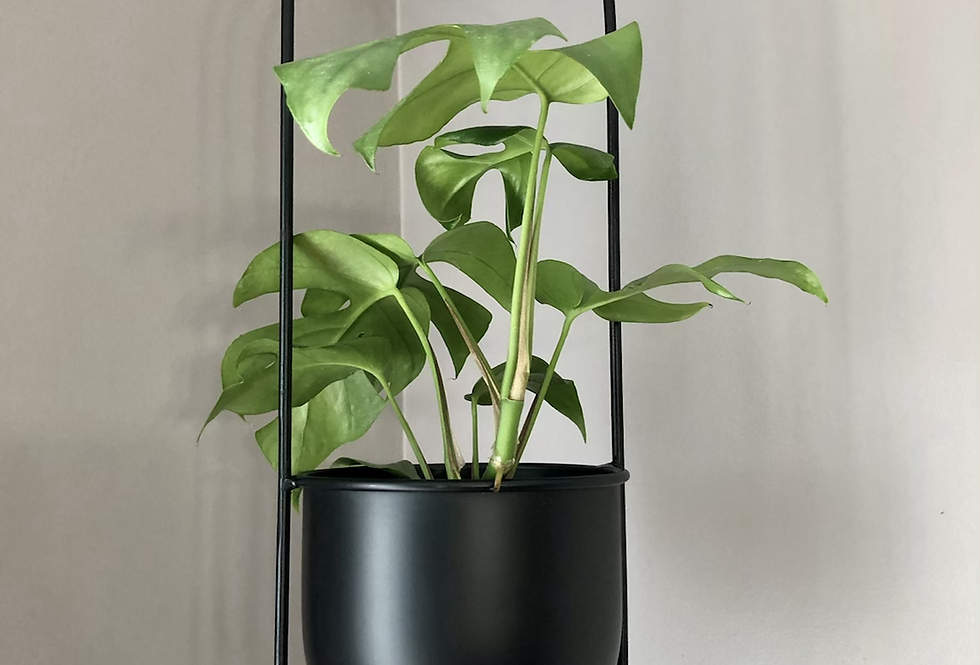 Oval Hanging Planter