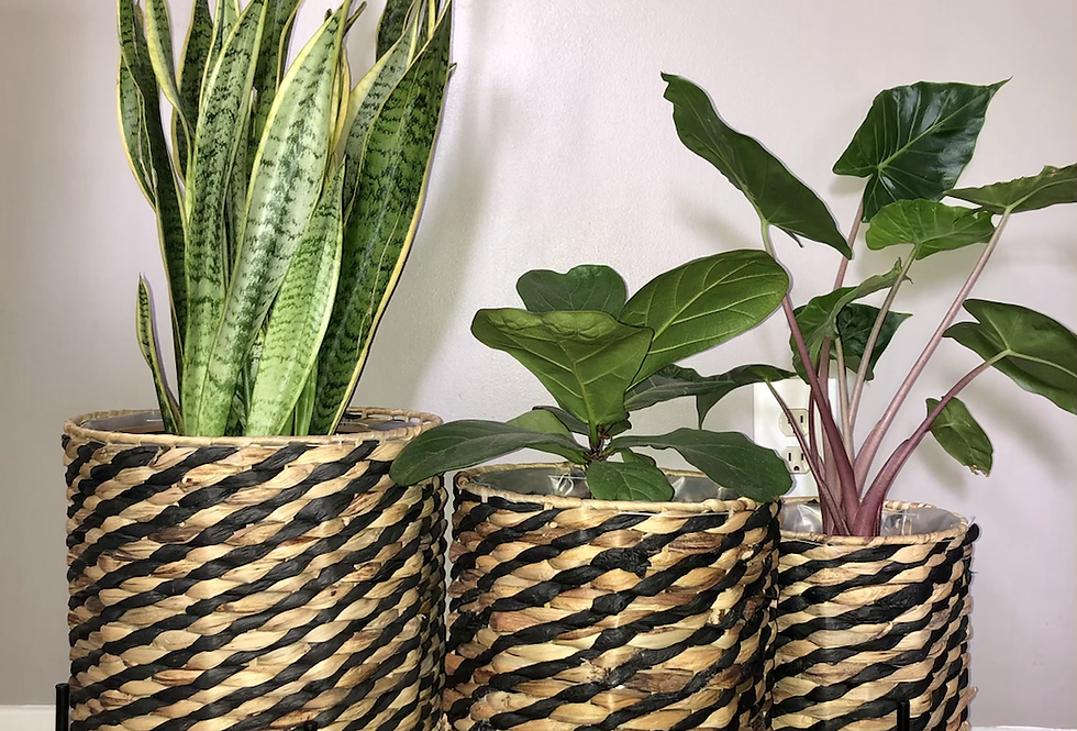 Lined Planter Baskets with Stands