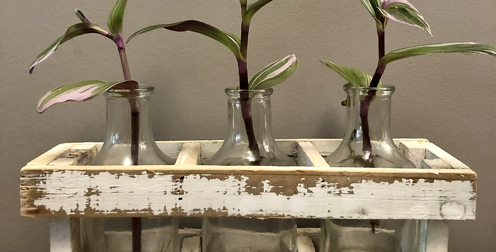 Country Style Propagation Station
