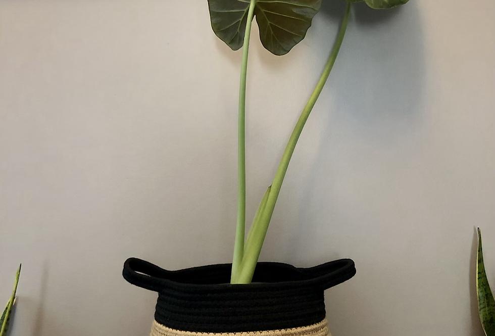 Black Woven Basket 'Bella'