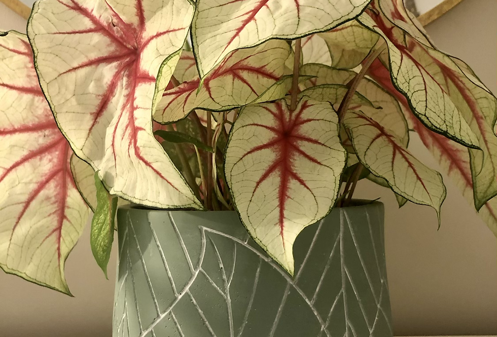Leaf Embossed Concrete Pot