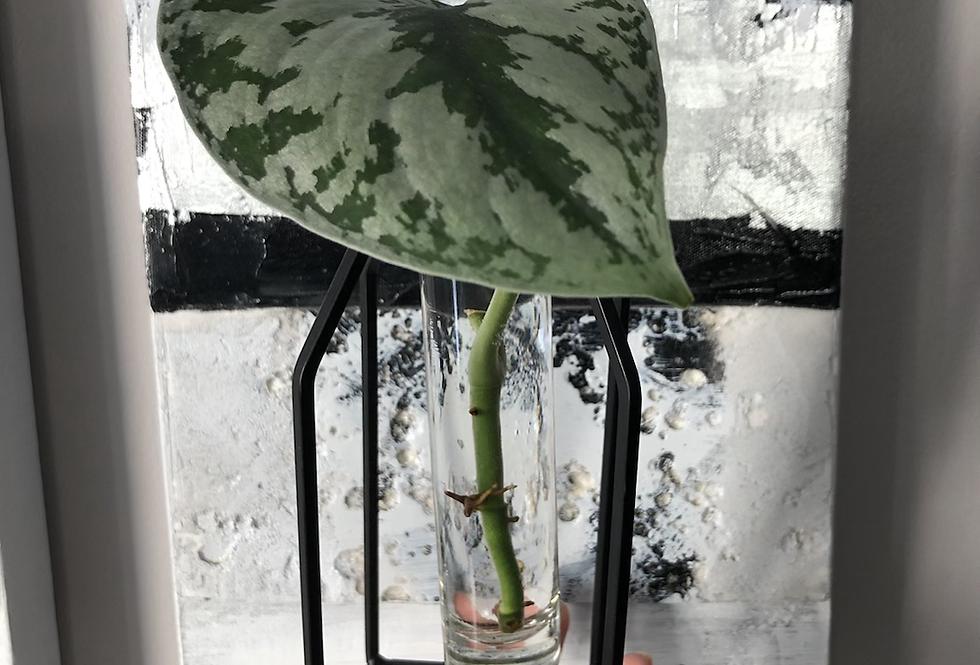 Propagation Tube Vase
