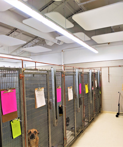 Lollypop Farm, Humane Society of Greater Rochester