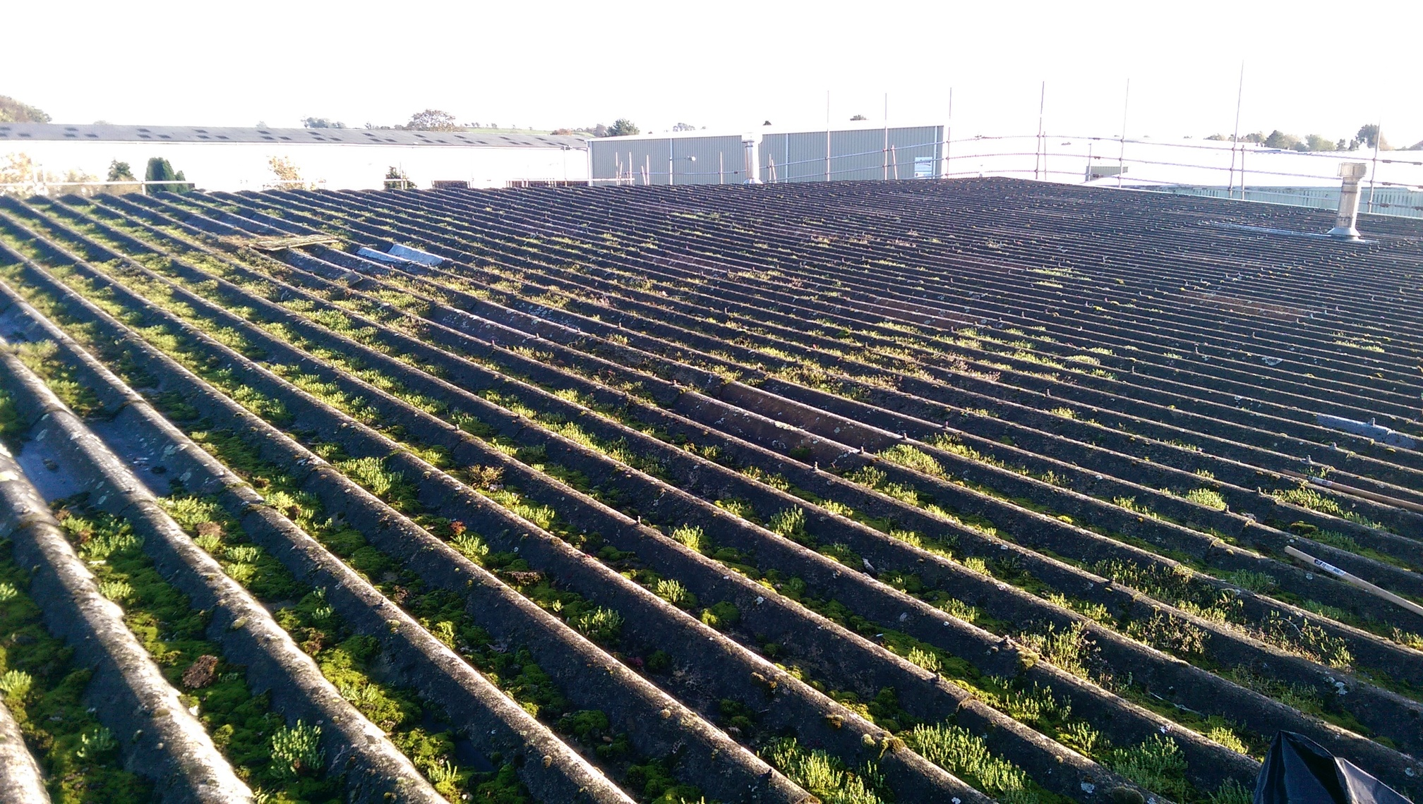 overgrown roof.jpg