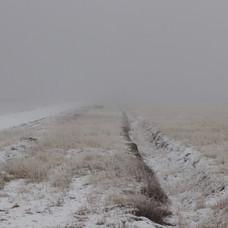 serie pasto nevado I