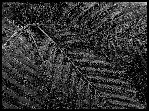 Herbario serie   1/20