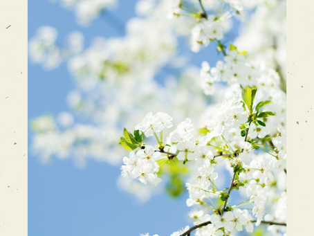 Scents to inspire for Spring