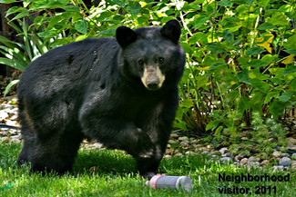 The Evolution of Bear-proofing Camp