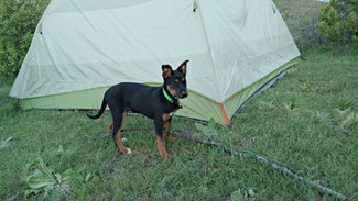 13 Tips for Camping with a Puppy!