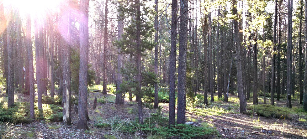 Pole Mountain forest