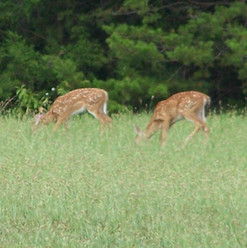 Wild life on the property