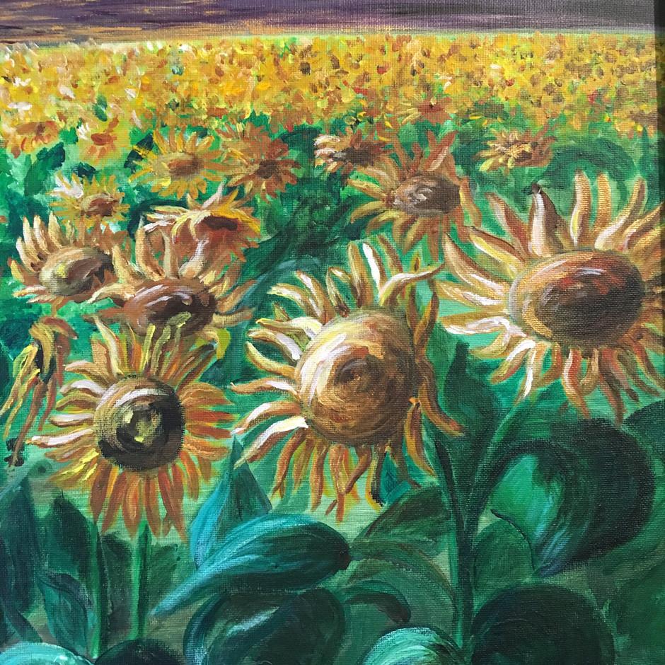 Sunflower field SOLD $360