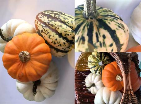 Pumpkin Patch Display: New Blog Tutorial