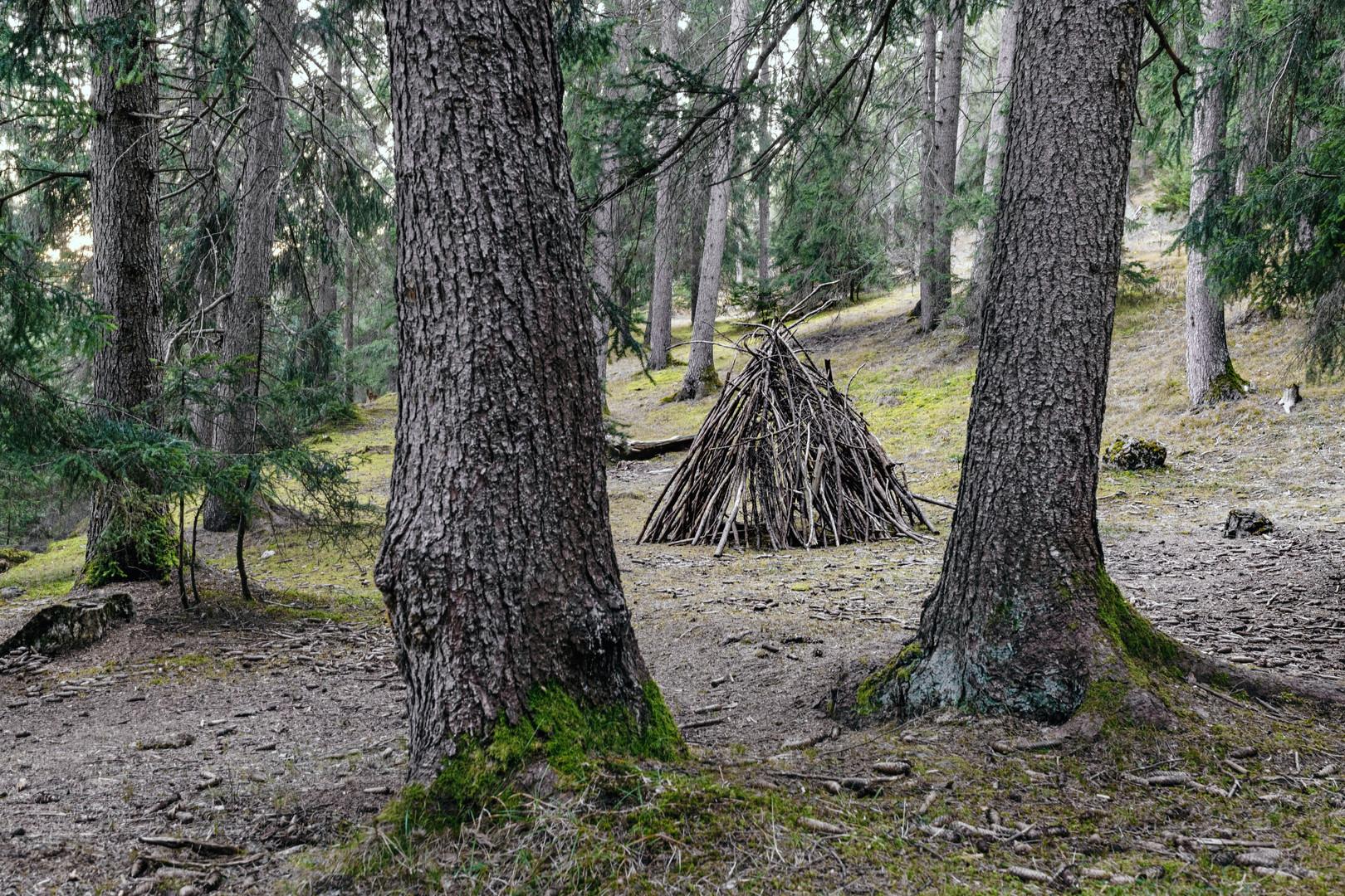 Forêt de Planeige