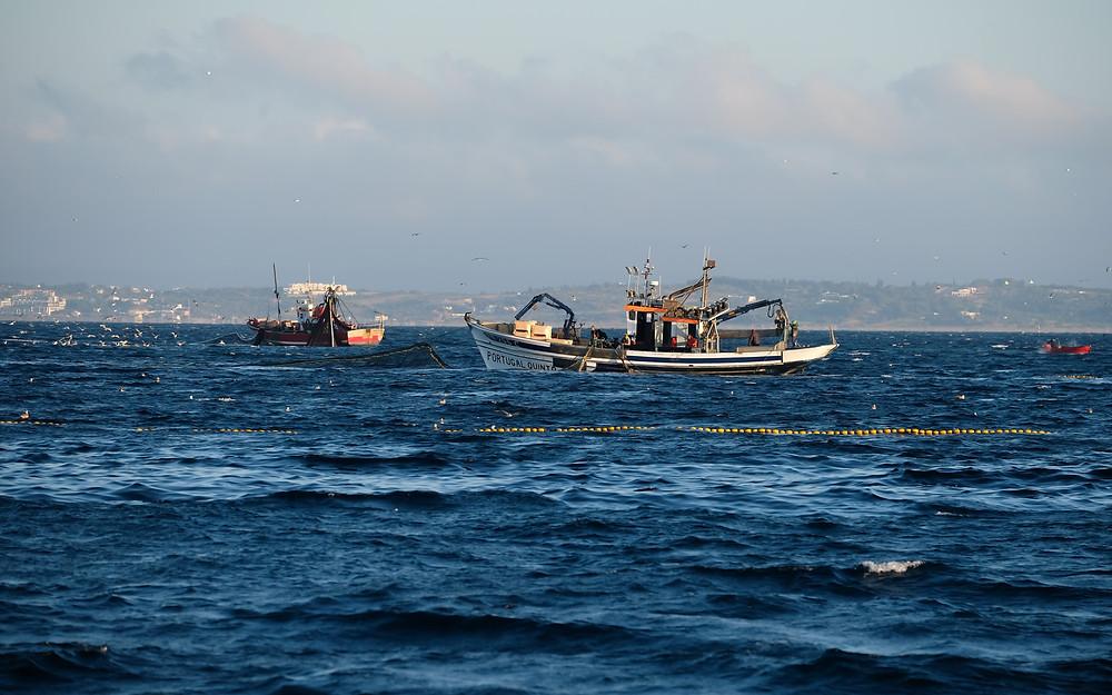 Duas traineiras a pescar sardinha ao largo de Portimão