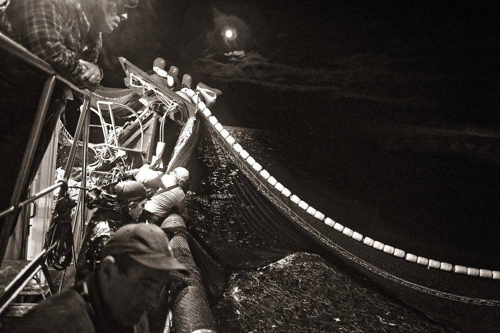 The Sardine Photo-Experience