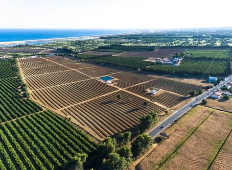 Lição de Geometria - agricultura intensiva no litoral do concelho de Vila Real de St.º António