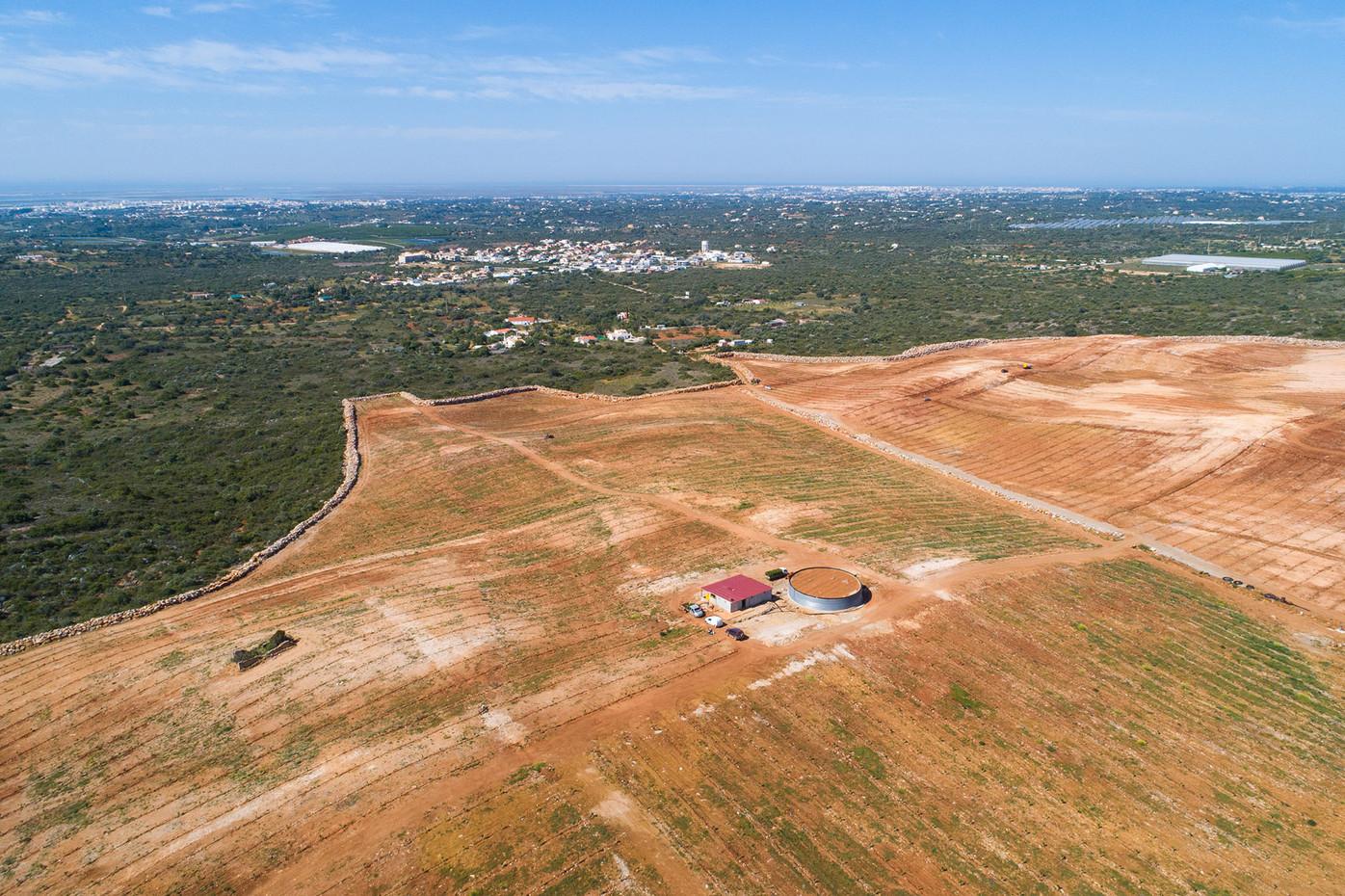 Instalação de novos pomares ao ar livre feitos após intervenções intensivas no solo, com despedregas e desmatações, nas proximidades da encosta Sul do Cerro de São Miguel   |   19 de Maio de 2020