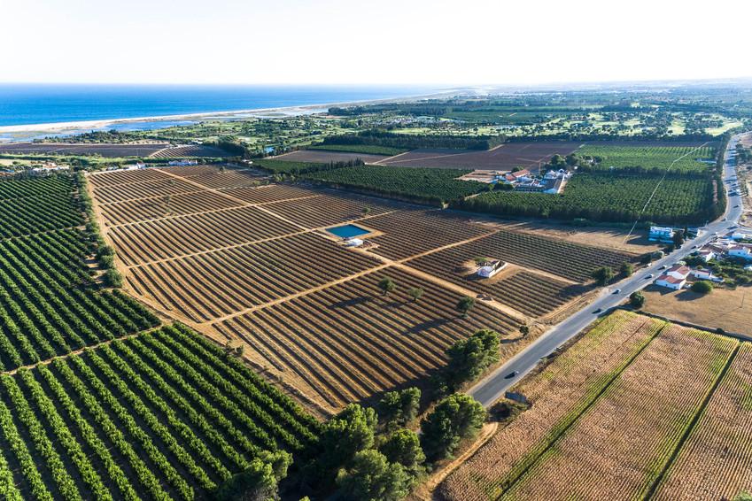 Agricultura intensiva, com laranjas, pêras-abacate e milho   |   Vila Real de St.º António   |   18 de Agosto de 2020