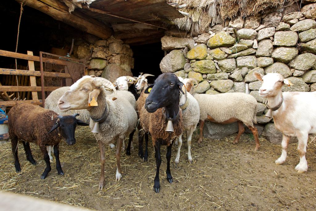 Afinal há mesmo pastores...