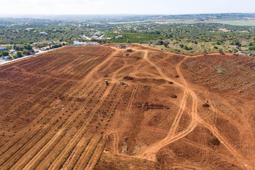 Instalação de pomares de pêra-abacate nas proximidades de Silves   |   13 de Junho de 2020