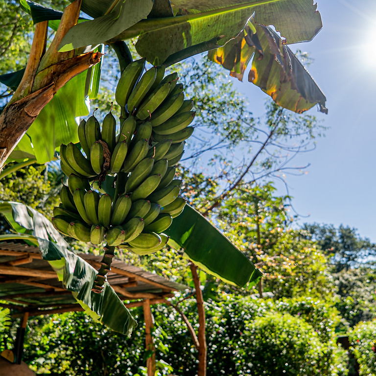 June, 6 Day Ayurveda Cooking Immersion: Food Alchemy in Costa Rica