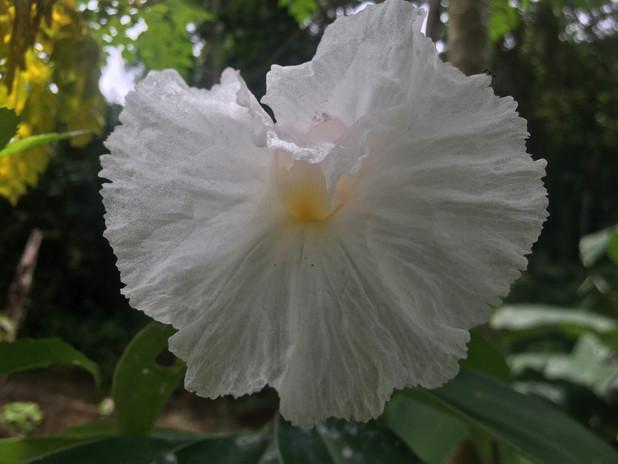 White Flower Spiral Flag
