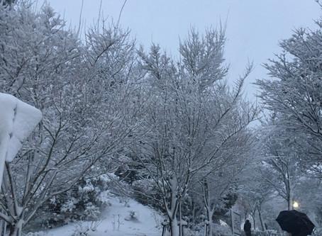 雪による影響で引きこもり