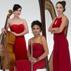 Quartet Musicians
