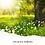 Thumbnail: Awaken Spring