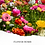 Thumbnail: Flower Bomb