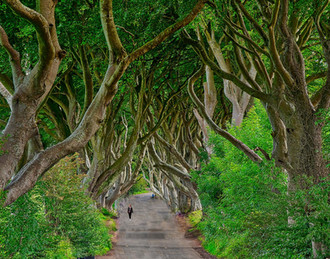 Hedges in Northern Ireland