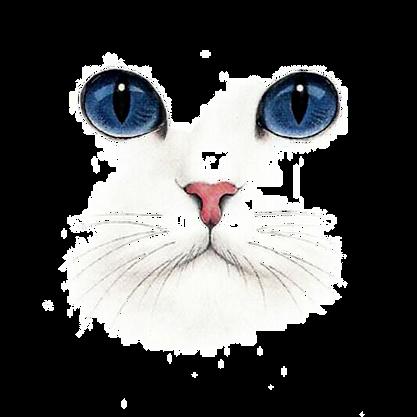 cat eyes.png