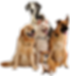 Who is using the keys dog image.png