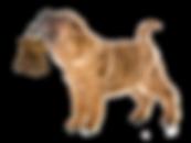 Who has the keys dog image.png