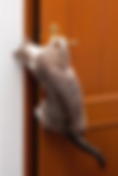 Who's In Control Cat Only.png