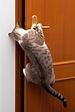 1PointUSA Door
