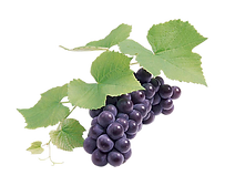 grape-transparent-16.png