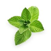 mint_PNG11.png