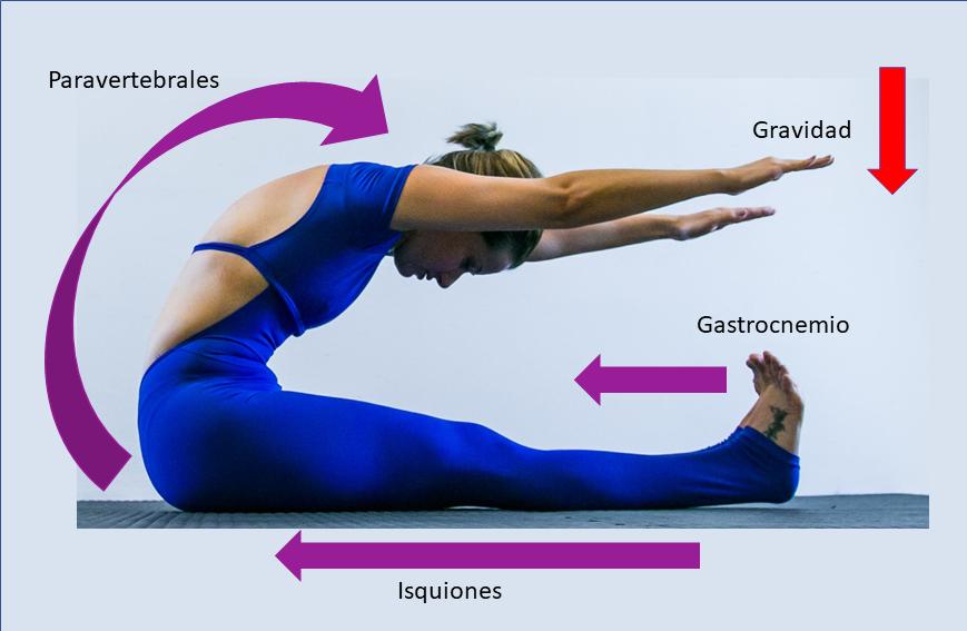 Curso de Anatomia e Biomecânica aplicada ao Pilates