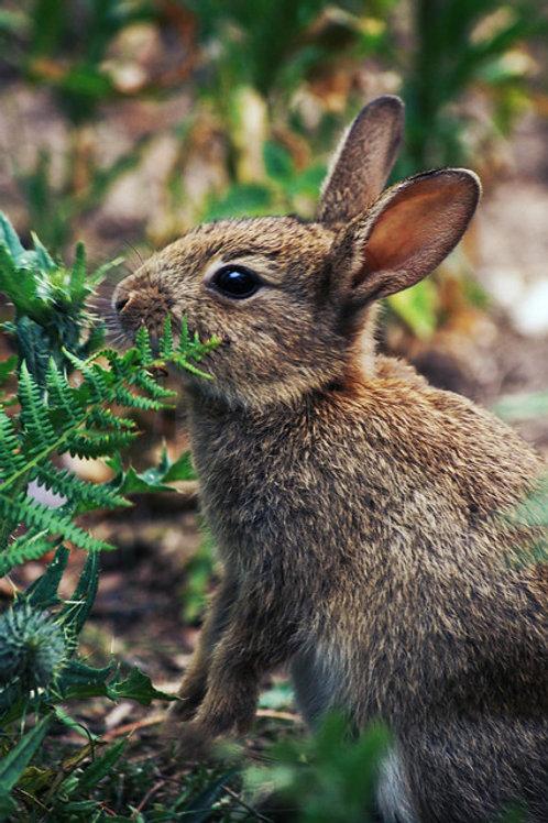 Wild Rabbit Greetings Card