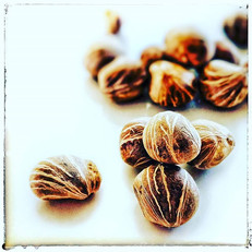 MALABAR CHESTNUTS_---_These nuts are the