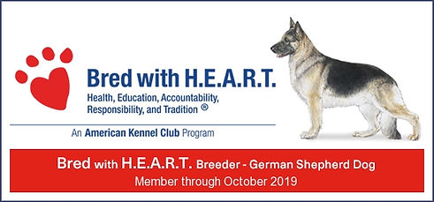 AKC German Shepherd Breeder Bred with HEART