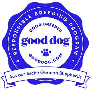 Aus der Asche Good Responsible GSD German Shepherd Breeder