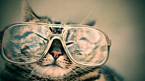 cat-984097_1920.jpg